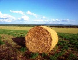 Contributi a fondo perduto e mutui agevolati in agricoltura su Campania Europa.it