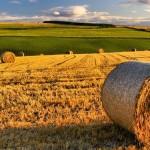 Finanziamenti agevolati e subentro in agricoltura ISMEA su Campania Europa.it