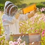 Finanziamenti apicoltura in Campania su Campania Europa.it